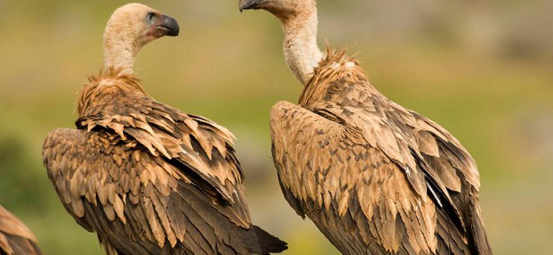 Ganadería - Águilas