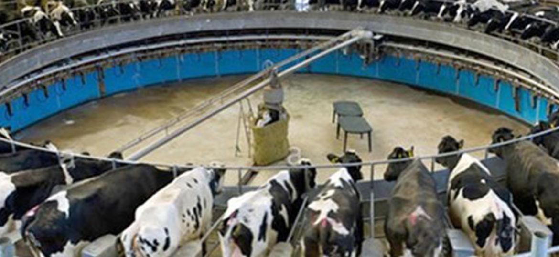Ganadería - Vacas