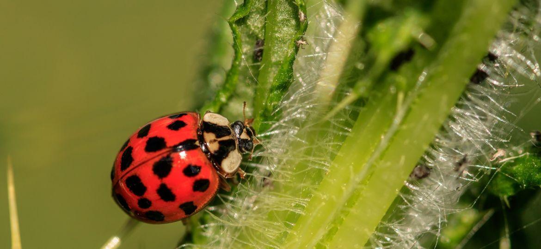ladybug-3442106_1920