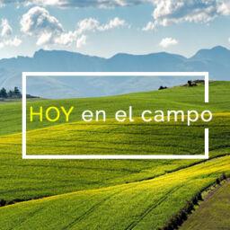 HOY en el campo
