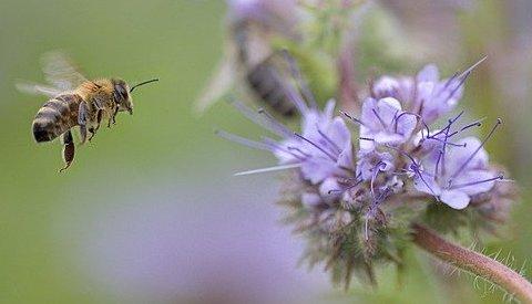 PB abejas