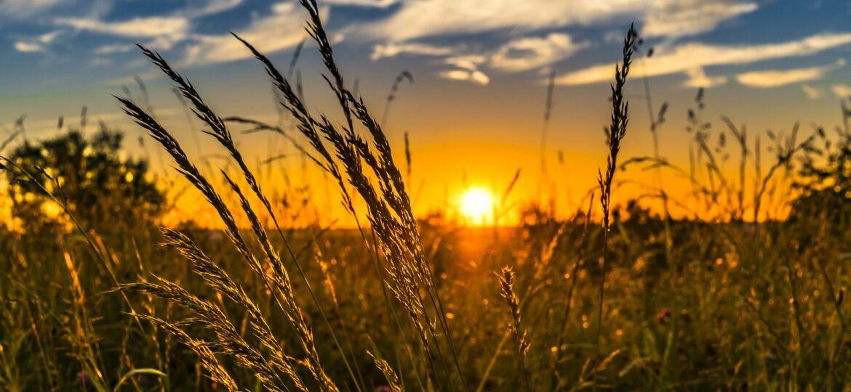 wheat-2391348_1920 (1)